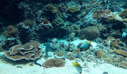 冲绳必去景点推荐「美丽海水族馆」里的热带海之海区域的珊瑚礁