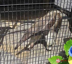 沖繩旅遊親子必去動物園「沖繩兒童王國」的食蟻獸