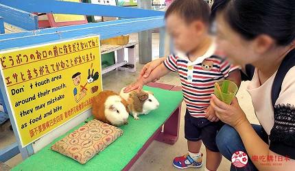 沖繩旅遊親子必去動物園「沖繩兒童王國」可餵食小動物