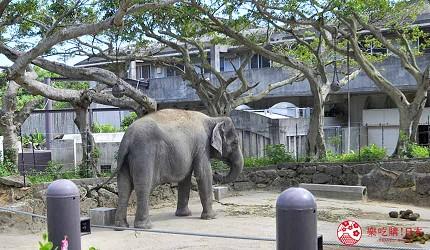 沖繩旅遊親子必去動物園「沖繩兒童王國」的大象