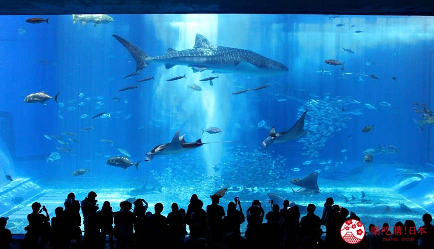 冲绳必去景点「美丽海水族馆」全攻略:设施、票价、表演、餐厅最好玩的都告诉你!