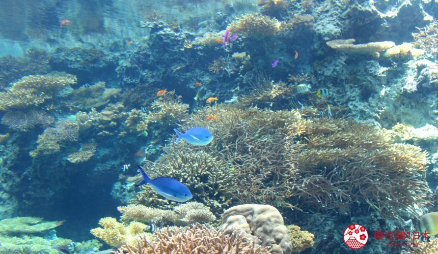 冲绳必去景点推荐「美丽海水族馆」里的鱼与珊瑚礁共舞