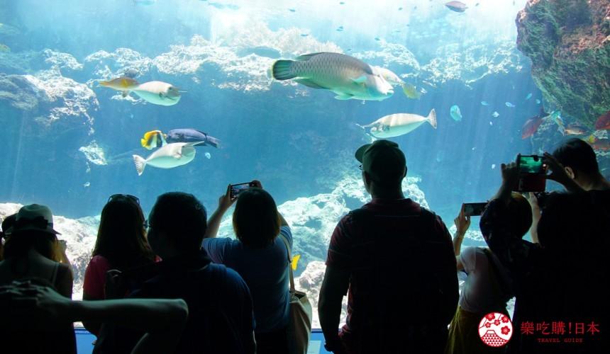 冲绳必去景点推荐「美丽海水族馆」里的热带海之海区域的水槽与鱼群