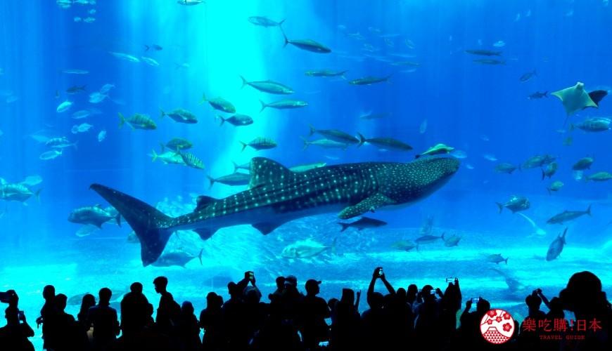 冲绳必去景点推荐「美丽海水族馆」里的黑潮之海区域的大水族箱