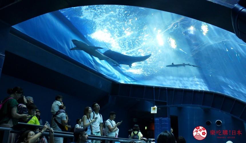 冲绳必去景点推荐「美丽海水族馆」里的黑潮之海区域的海洋观赏区