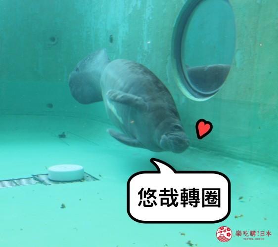 冲绳必去景点推荐「美丽海水族馆」里的海牛泳姿之一