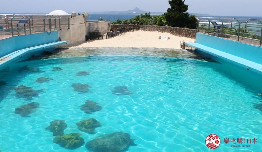 冲绳必去景点推荐「美丽海水族馆」里的海龟馆的人工沙滩