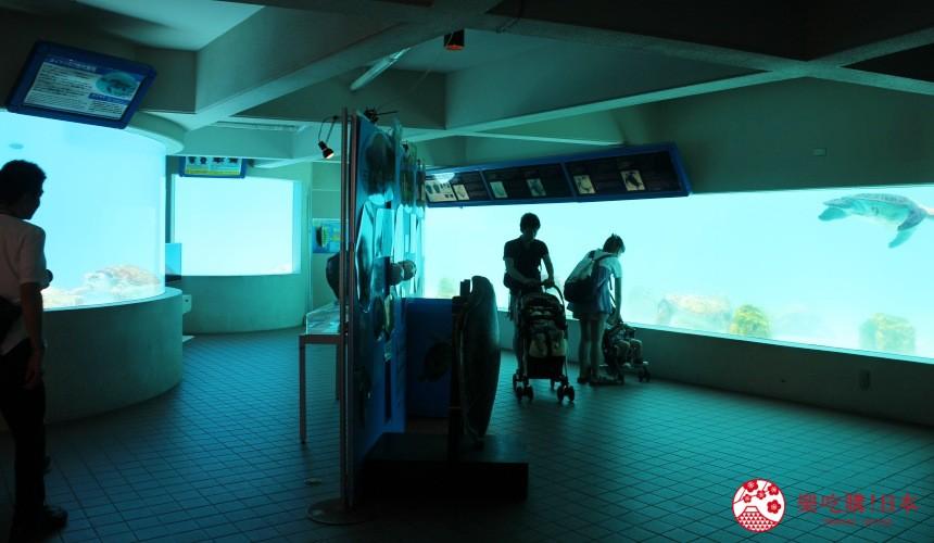 冲绳必去景点推荐「美丽海水族馆」里的海龟馆地下一楼观察室