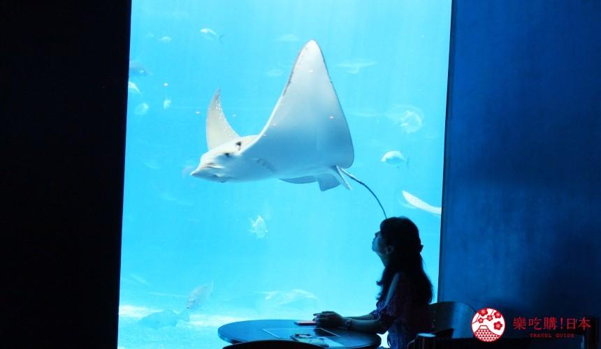 冲绳必去景点推荐「美丽海水族馆」里的黑潮之海区域的魟鱼