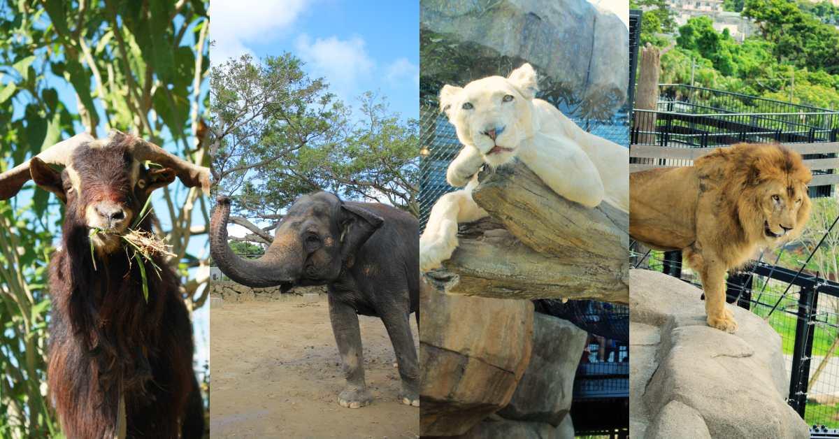 沖繩旅遊親子必去動物園「沖繩兒童王國」的沖繩本土動物