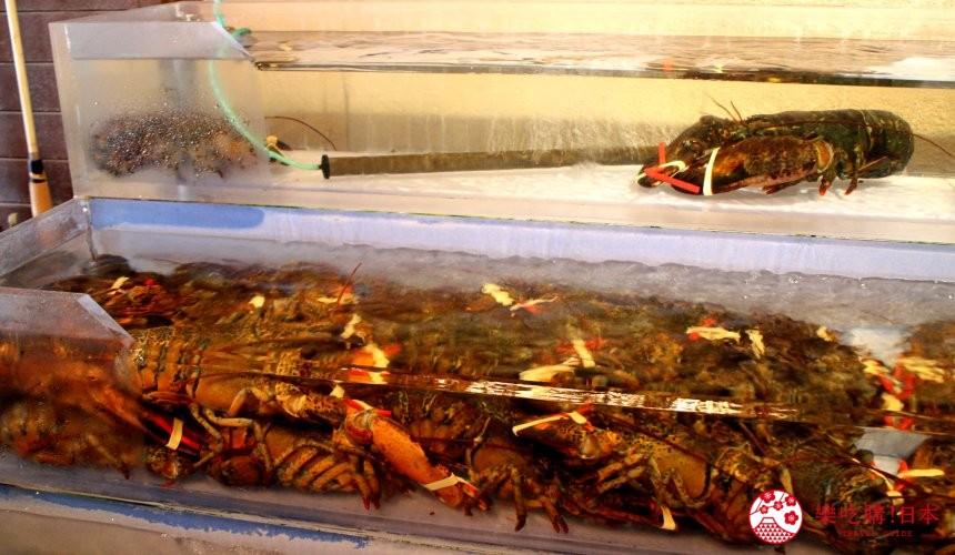 沖繩美國村超人氣名店「Red Lobster」店內水族箱的龍蝦